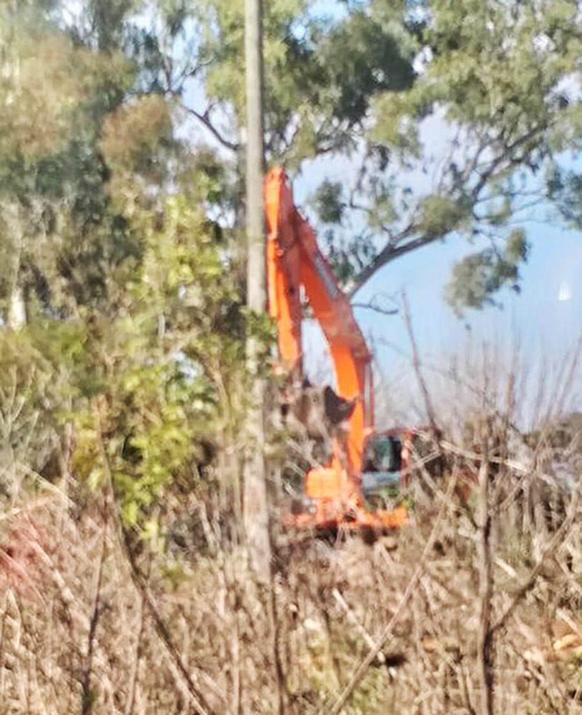 Castelar Deforestación: Alarma