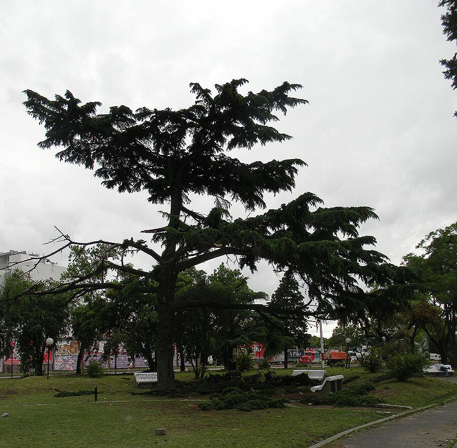 Plaza Mitre Tornado 2011 Castelar Morón
