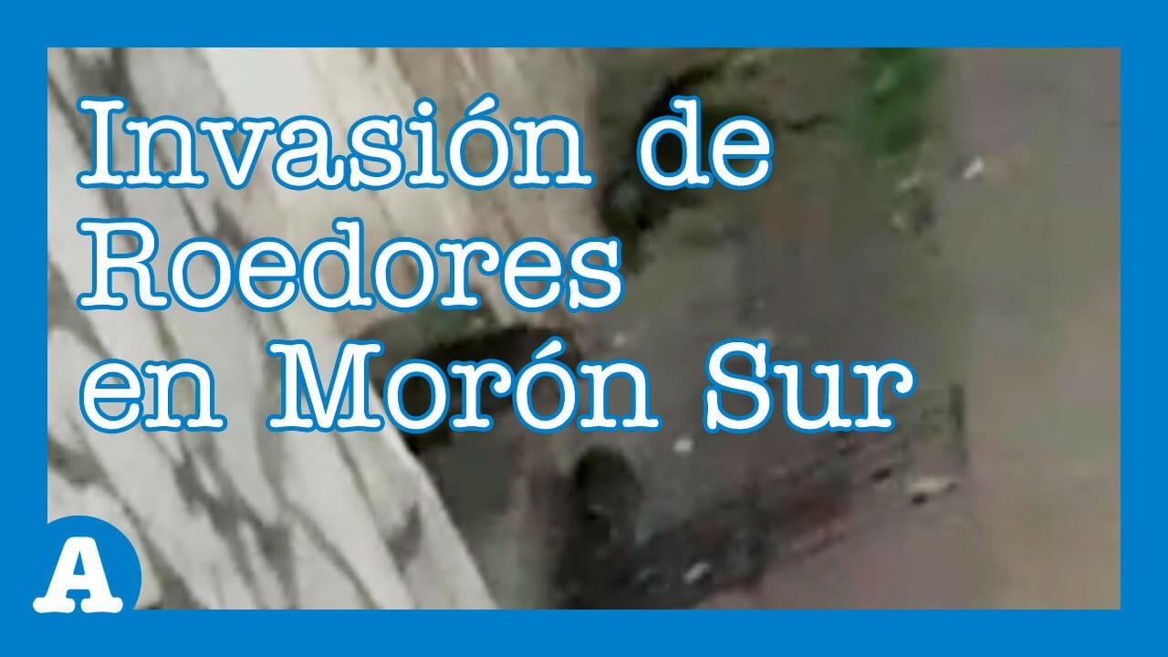 Morón: Invasión de Roedores Altera un Barrio de Haedo - Diario Anticipos