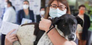 Vacunación antirrábica para perros